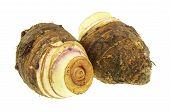 Close Up Taro Or Colocasia Esculenta Isolated