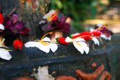 petals for worship of hindu