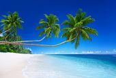 Tropical Paradise.