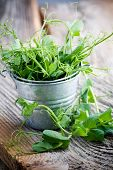 Fresh pea sprouts in little bucket, selective focus