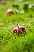 Fresh and colorful apples on grass, selective focus