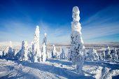 Beautiful sunny winter landscape in Lapland Finland