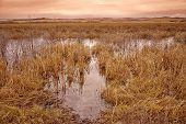 Grassy Bog Landscape at Dusk