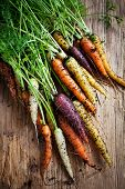 Fresh rainbow carrots picked from the garden