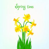 Spring card background with daffodil