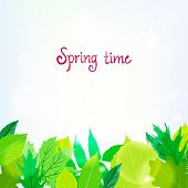 Spring card background with green leaves