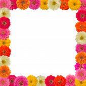 Frame Of Zinnias Flower