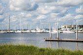 Pelicans On Pier Between Marsh And Marina