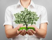 stock photo of beggar  - Open female hands holding a money tree - JPG