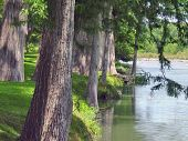 Tree linned river in Texas