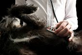 Veterinarian Examining A Dog With A Stethoscope