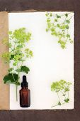 Ladys mantle herb flower border with medicinal dropper bottle on a natural hemp notebook and brown paper background. Alchemilla.