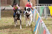 Monkeys Ride Dogs At Georgia State Fair
