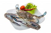 stock photo of blue crab  - Raw blue crab  - JPG