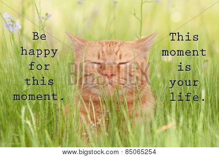 Be happy for this moment. This moment is your life - an inspirational quote by Omar Khayyam, with an