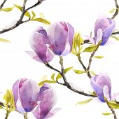 picture of magnolia  - Watercolor magnolia seamless pattern on white background - JPG