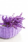image of lavender plant  - basket full of lavende  - JPG