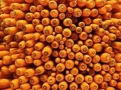 Carrot Riot