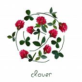 foto of red clover  - Vector floral frame with clover red flowers - JPG