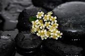 stock photo of wet  - Tropical flower with wet stones on wet background - JPG