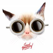 Good morning. Funny cat with cups of coffee poster