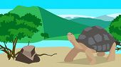 picture of tortoise  - Tortoise near a river with stone and bushes on a background of hills - JPG