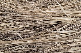 image of dry grass  - Background the dried - JPG