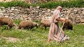 stock photo of shepherd  - Shepherd leads his sheep through the pastures of Israel - JPG