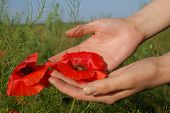 Poppy On Hands