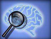 Cerebro - personalidad - identidad