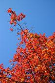 New England Fall Foliage..