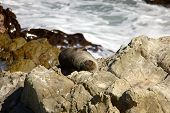 Seal Asleep On Rocks