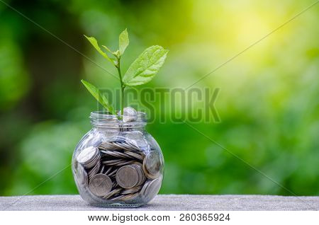 poster of Money Bottle Banknotes Tree Image Of Bank Note With Plant Growing On Top For Business Green Natural