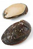 Tokobushi , Abalone , Shellfish
