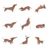 Funny Playful Purebred Brown Dachshund Dog Activities Set Vector Illustrations On A White Background poster