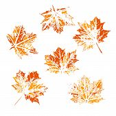 Set Of Vector Leaf Imprints. Collection Of Leaves Imprints On Transparent Background. Grunge Leaves. poster