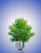 Tree in light bulb symbolizing green energy