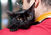 Vet caressing cute black cat on his shoulder