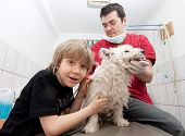 Little boy at vet listening to his dog's heartbeats in stethoscope