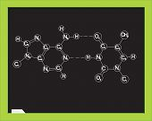 Blackboard with chemical formula. DNA. Vector illustration