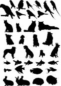 image of cockatiel  - 36 Vector pet silhouettes - JPG
