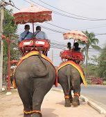 ridding  elephants thailand