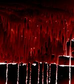 deep red pant drips