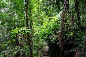 jungle trail in sarawak