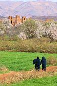 almond blossom in Morocco