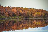 Autumn Landscape -forest River With Autumn Golden Tree At The Bank. Autumn Colorful Forest Nature -  poster