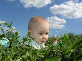 Baby In Herb And Sky poster