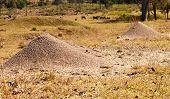 Australian Bull Ants Nest Granite Mound