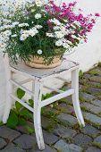 Flower Pot On Chair