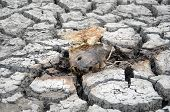 Dead Fish On Dry Wetland